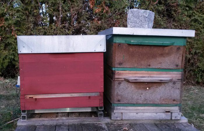 Stockwaage Honigreporter im Ausseneinsatz mit einer Dadant mod. 12er Beute neben einer Zanderbeute ohne Stockwaage.